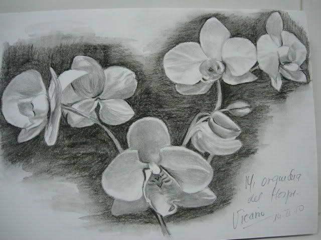 dibujos de flores a lapiz sanguina , Buscar con Google