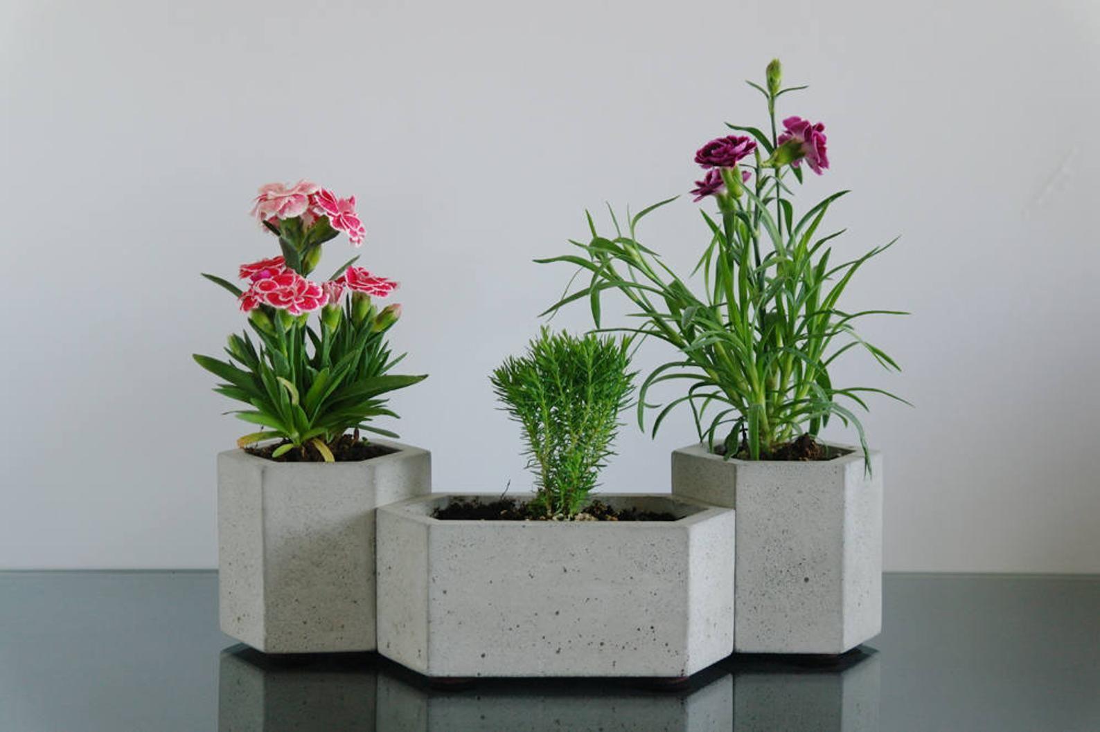 Set Of 3 Hexagon Concrete Planters Cactus Planter Succulent Etsy Concrete Planters Cactus Planter Succulent Planter