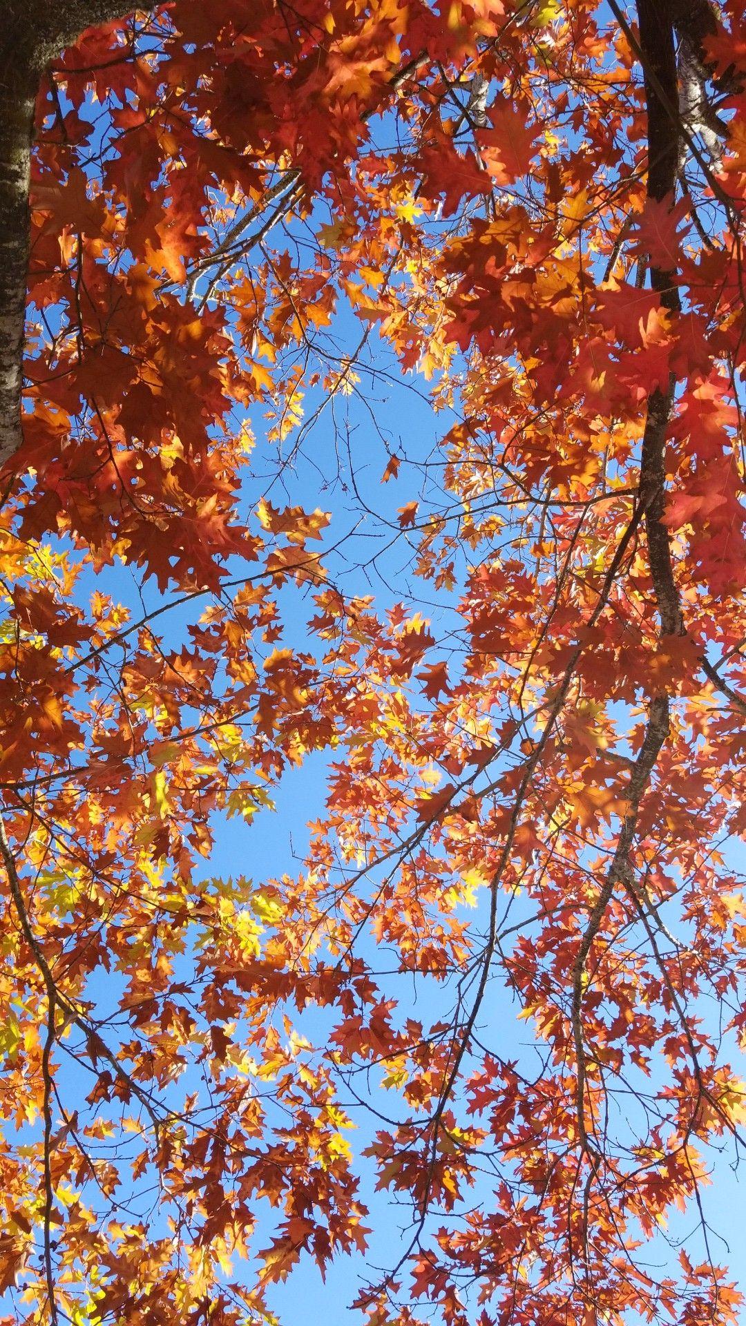 October Autumn Landscape Autumn Photography Autumn Scenery
