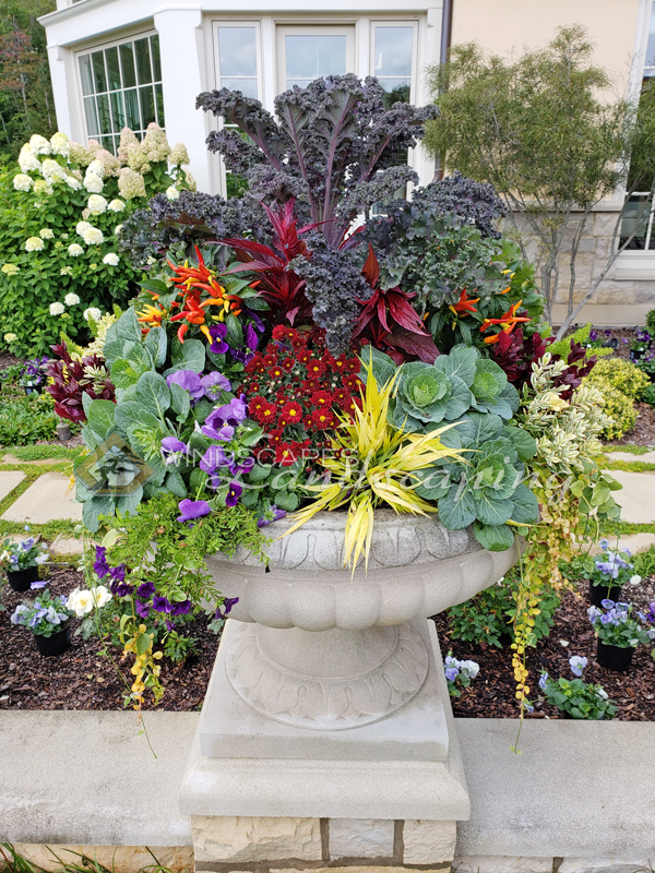 Fall Planter Pot With Fall Annuals Fall Planters Landscape Design Landscape