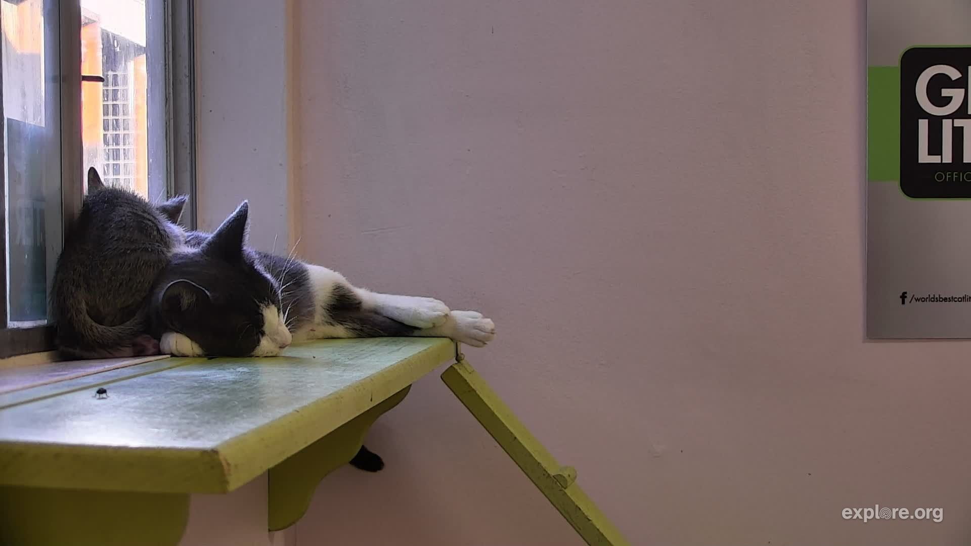 I M Watching The Kittenrescue Cam On Explore Org Streaming Live From Los Angeles Ca Snapshots Cats