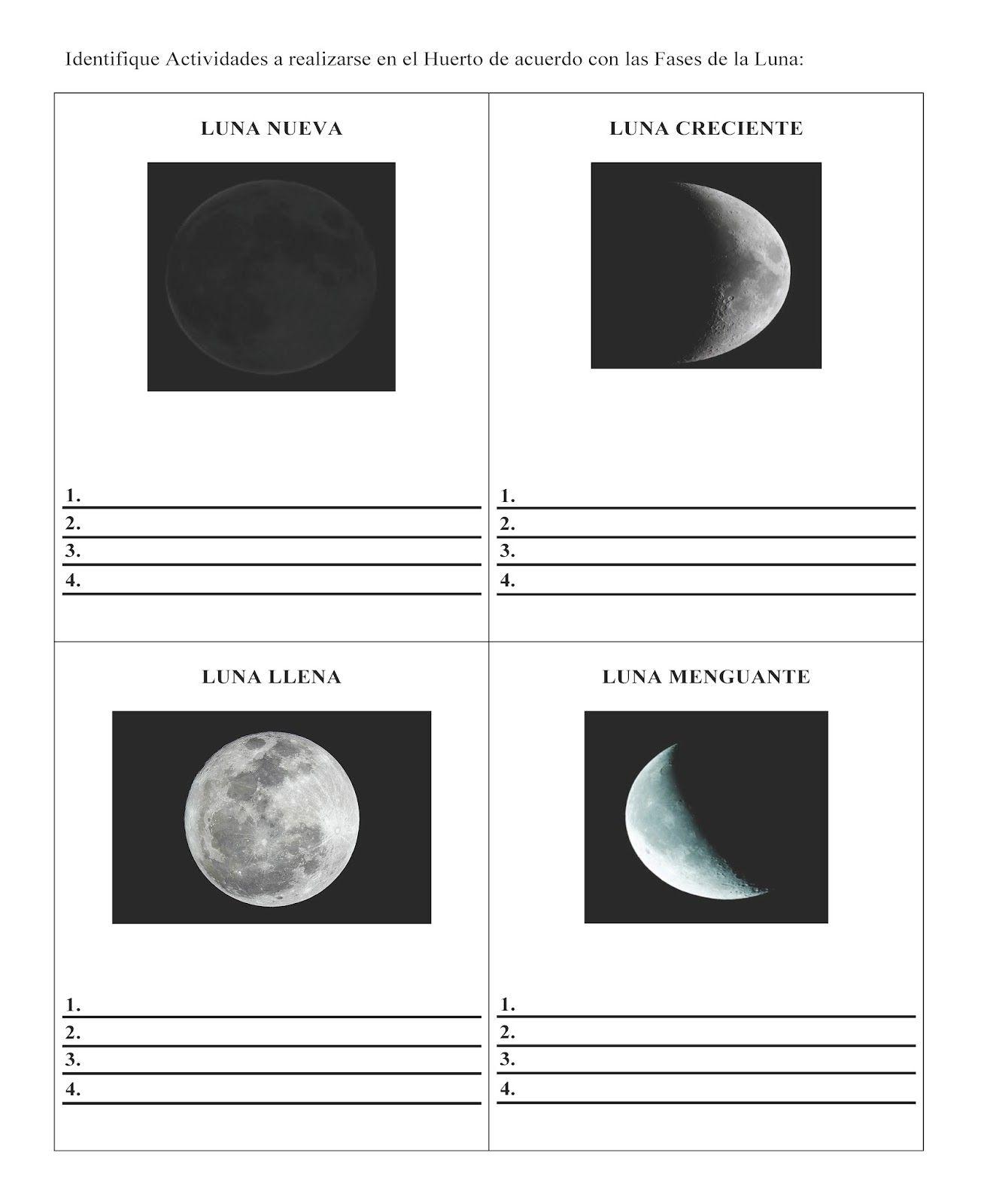 Agro Juvenil Las Fases De La Luna