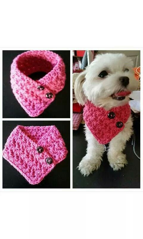 Pin By Celena Trujillo On Ropa Para Chihuahuas Pinterest Crochet