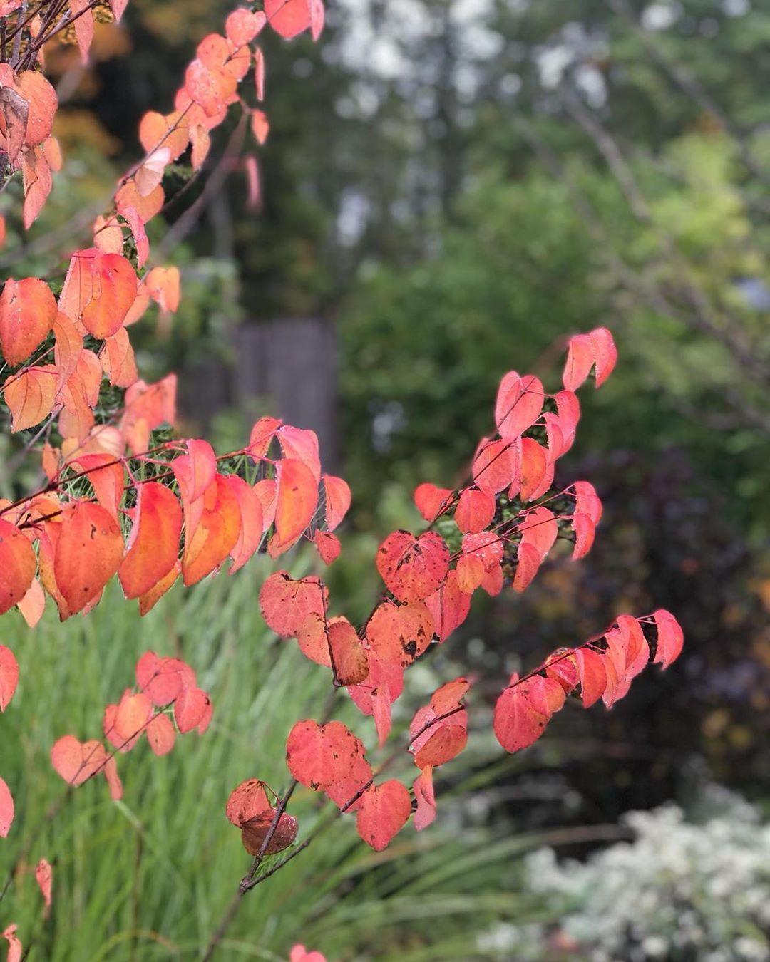 Pin On Gardendesign