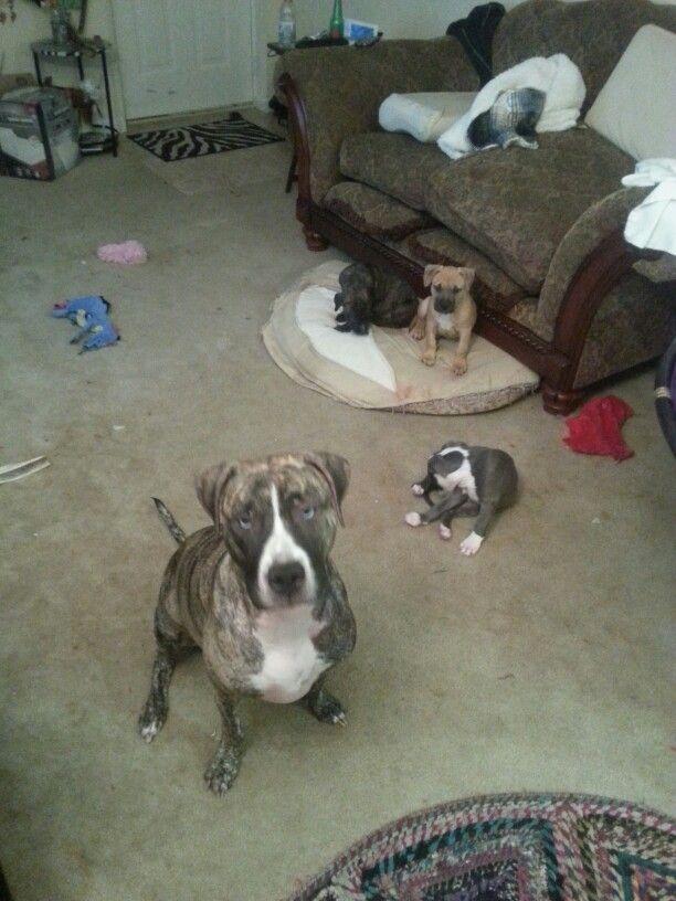 (Front to back) Babigurl, Rosie, Batman, and Zeus