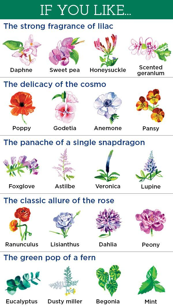 20 Flowers You Ll Love Based On Your Favorites Flower Names Planting Flowers Plants