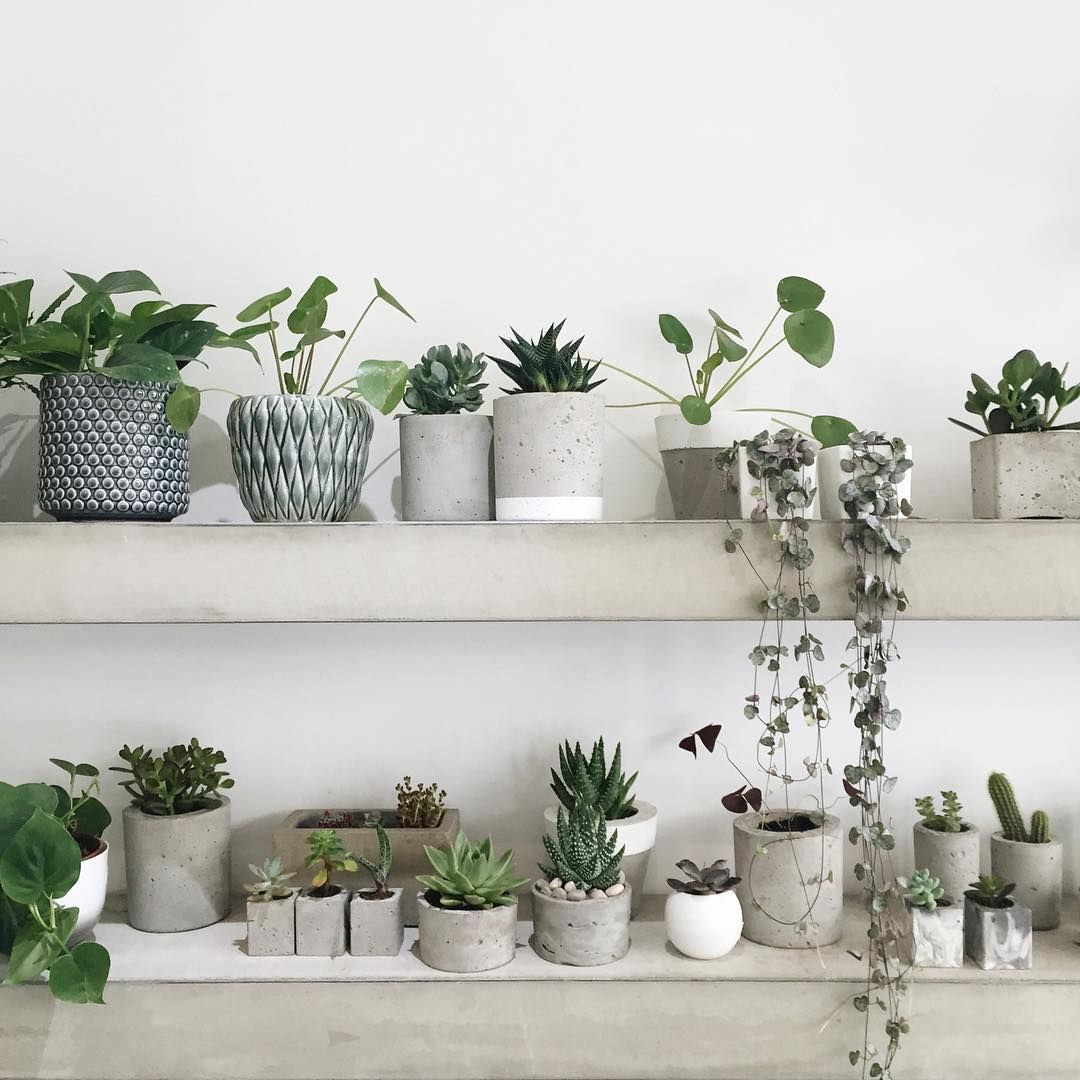 Green plants and grey and concret planters plantes for Plante verte decorative