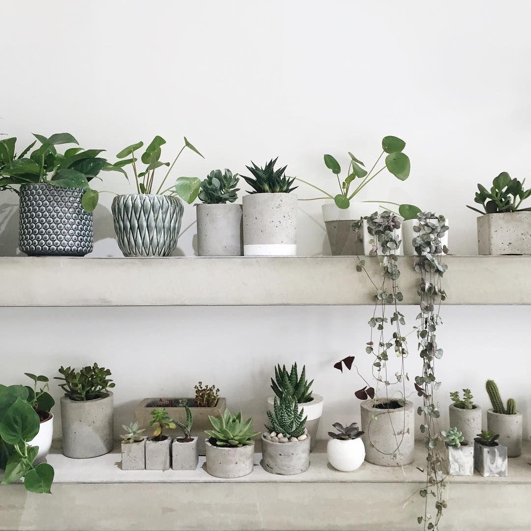 Green plants and grey and concret planters plantes vertes et pots gris et en b ton fantasy - Zimmerpflanzen groay ...