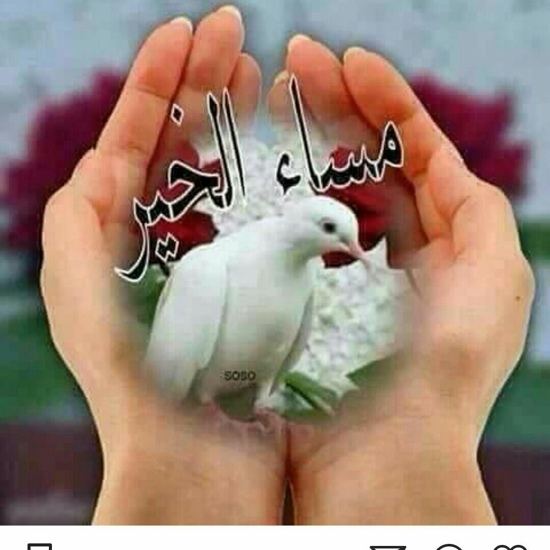 Pin By Qwerty Uiop On وردةجميلة Bible Quotes
