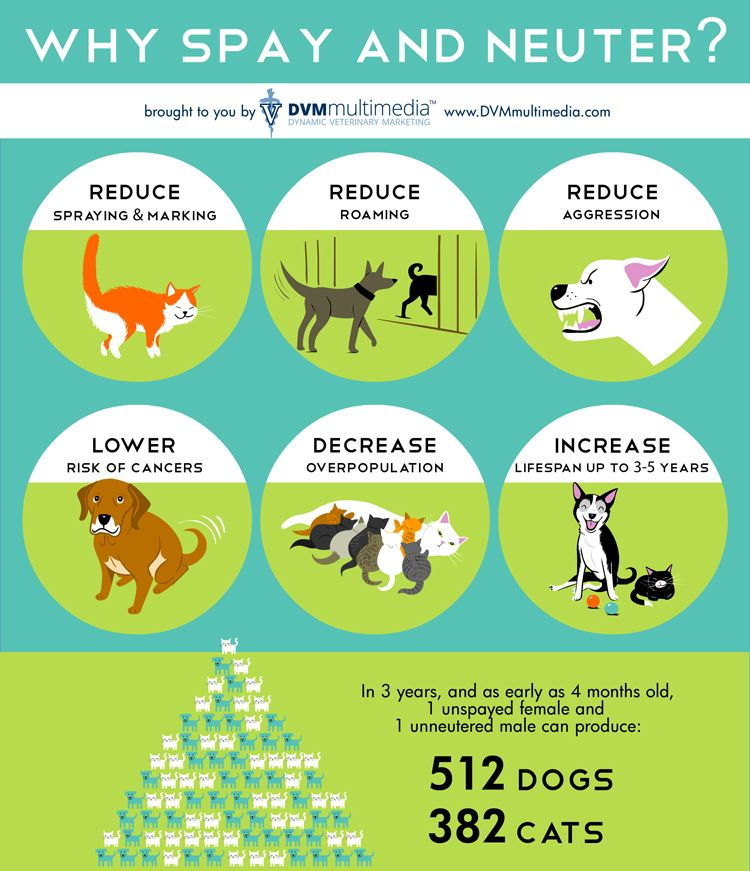 Spay And Neuter Pet Safety Tips Pet Safety Responsible Pet Owner Animal Education