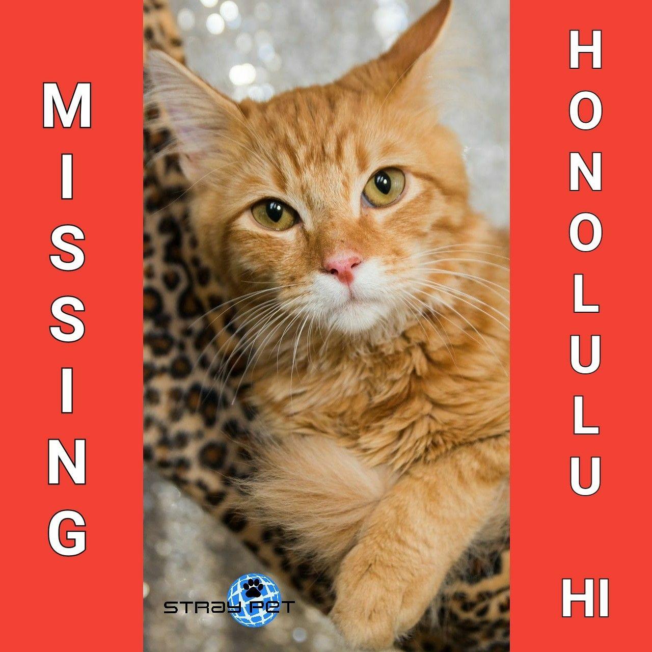 Pin On Hawaii Missing Pets