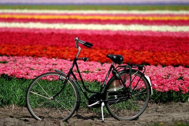 Keukenhof, pedalare tra campi di tulipani in Olanda - Mag-Lifestyle | maglifestyle