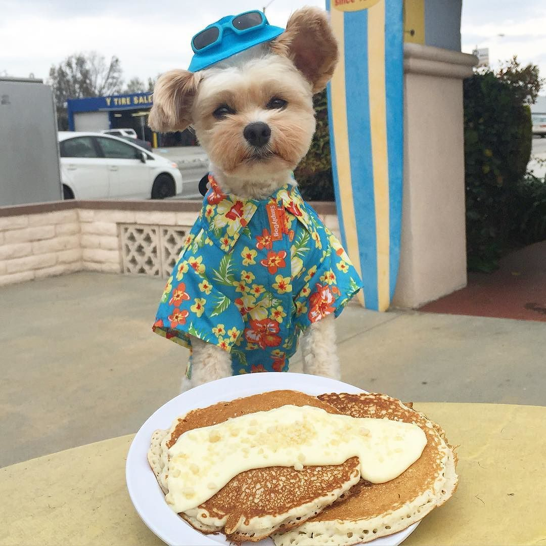 Looking like a Hawaiian tourist with these fluffy macadamia nut pancakes from Aloha Food Factory in Alhambra. by popeyethefoodie