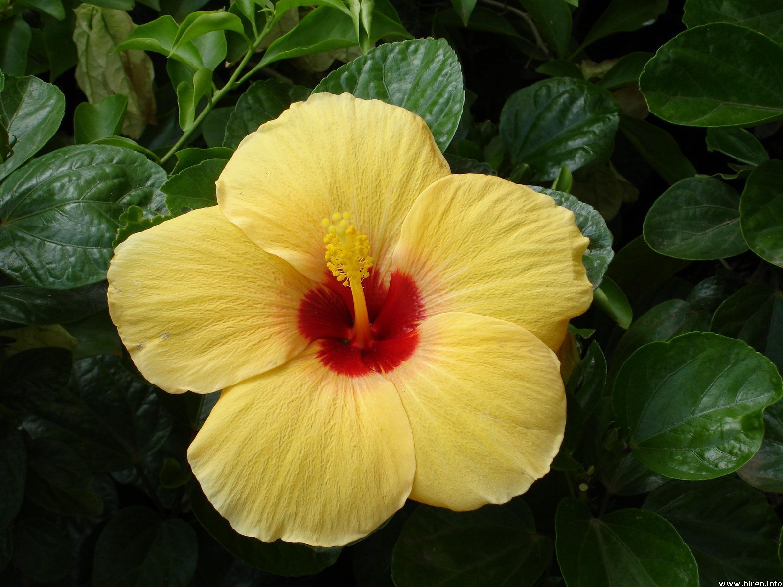 Pin by susan smith on tropical flowers | Exotic flowers