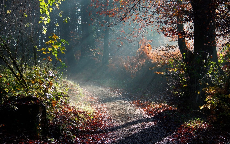 Forest Sunny Morning Macbook Pro Wallpaper Hd Jpg 1 440 900 Pixels Autumn Landscape Nature Wallpaper Nature