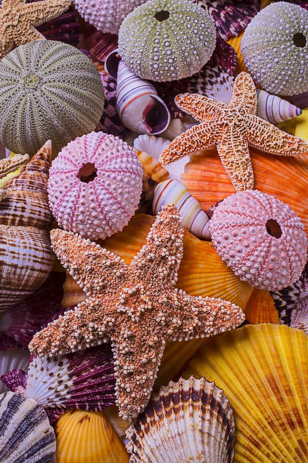 Stars Among The Seashells by Garry Gay