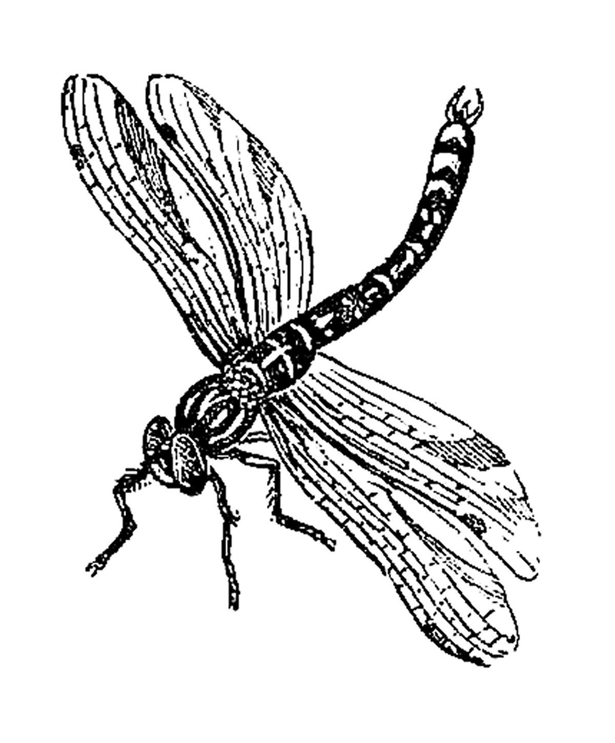 Image Result For Dragonfly Drawings Clip Art Dragonfly Drawing Dragonfly Clipart