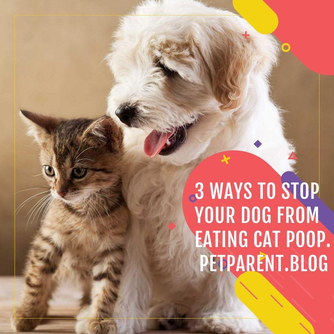 Pin on Pet Parent Education