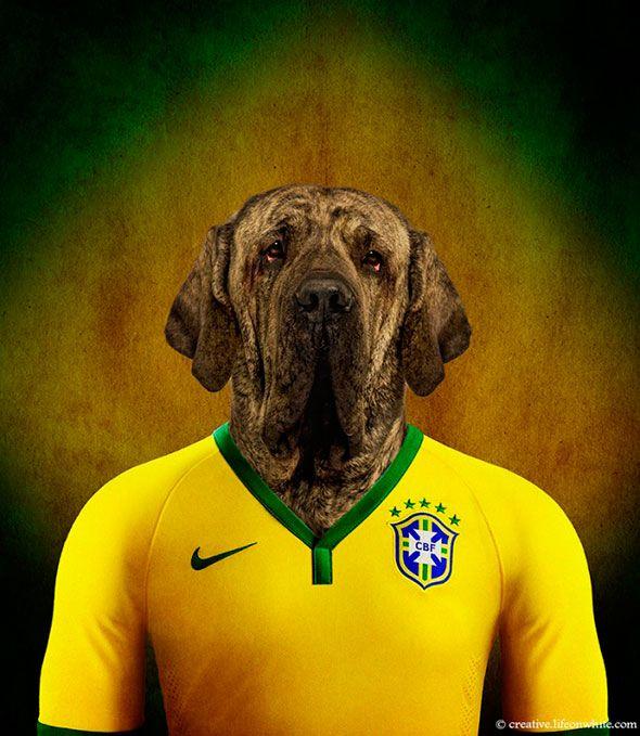 Cães de raças nativos de vários países vestem a camisa da sua seleção