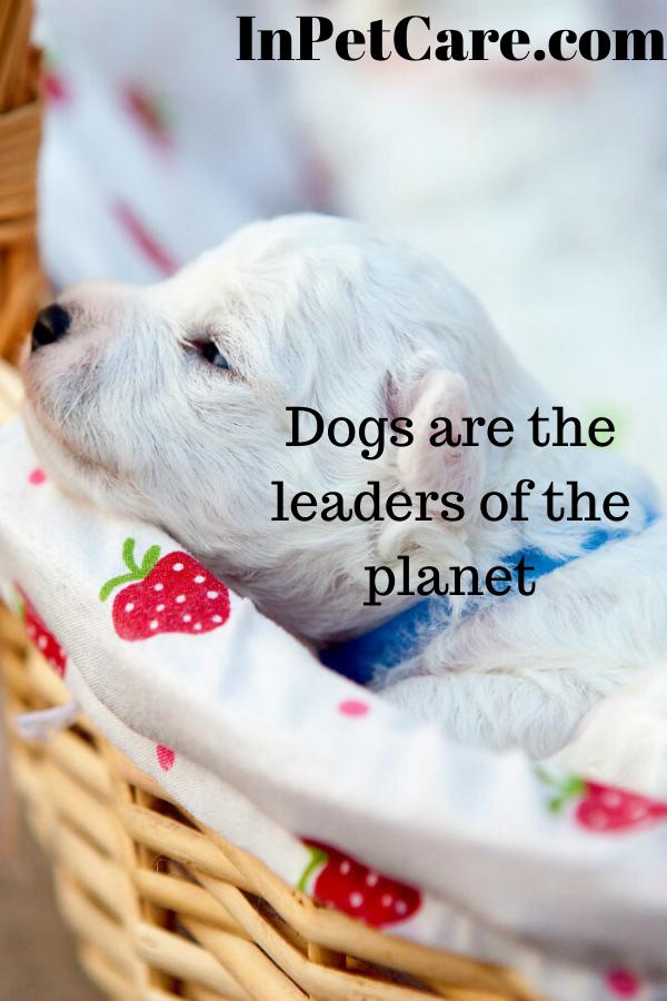 White Dog Dog Sitting Dog Kennel Dogs