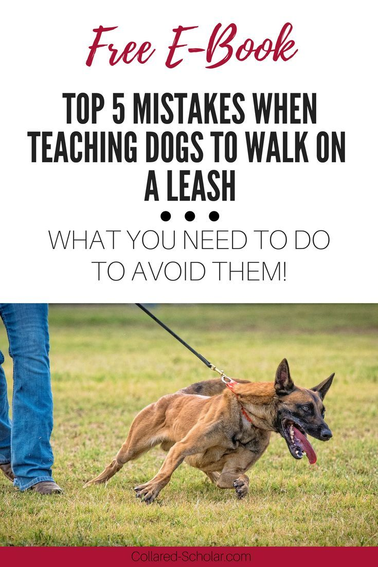 Stop Dog Jumping And Dog Leash Training Check The Image For Many