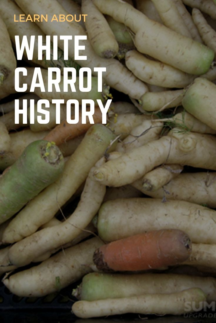 Learn About White Carrot History And Care   Gardening   Pinterest ...