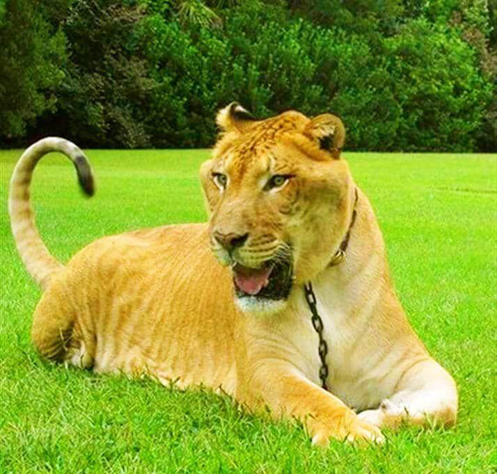 Pin by Kristen Tarver on animals | Big animals, Animals