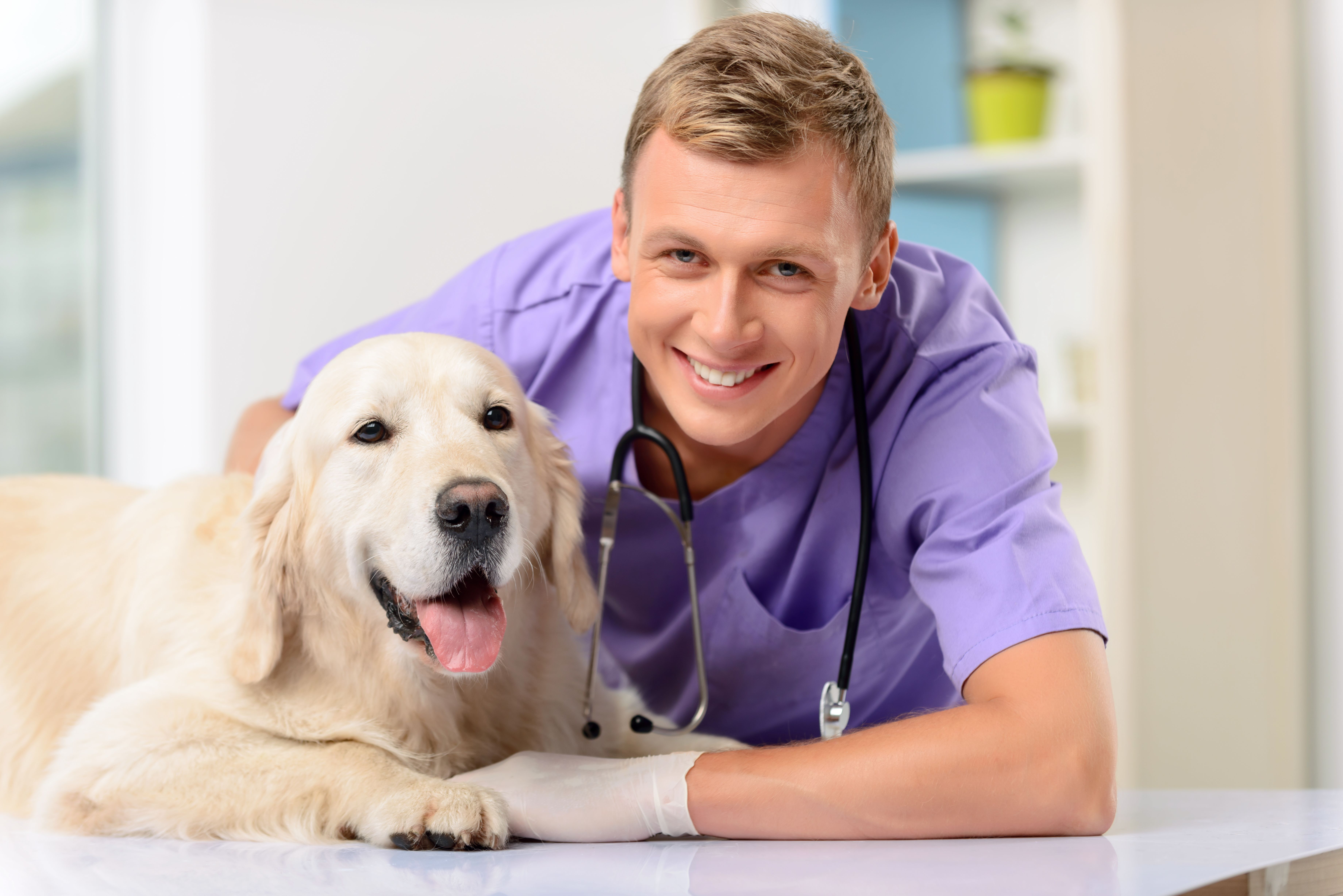 How To Choose A Veterinarian For Your Dog Veterinarian Veterinarian Losing A Dog Dog Safe