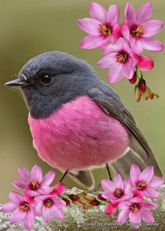 Karima on Twitter Pinkish grey sparrow