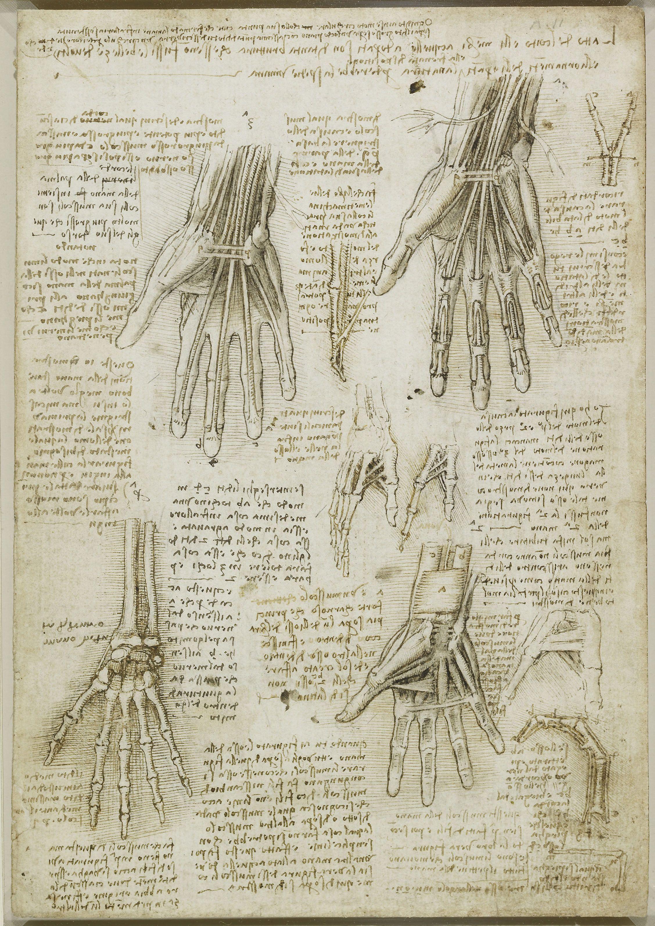 Leonardo Da Vinci. Dell\' Anatomia. The bones, muscles and tendons of ...