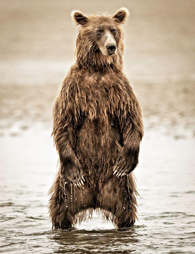 Standing Bear by Lisa Aikenhead on 500px