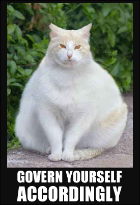 I hate to admit it, but I love a fat cat. (The disgusted expression is a serious bonus.)