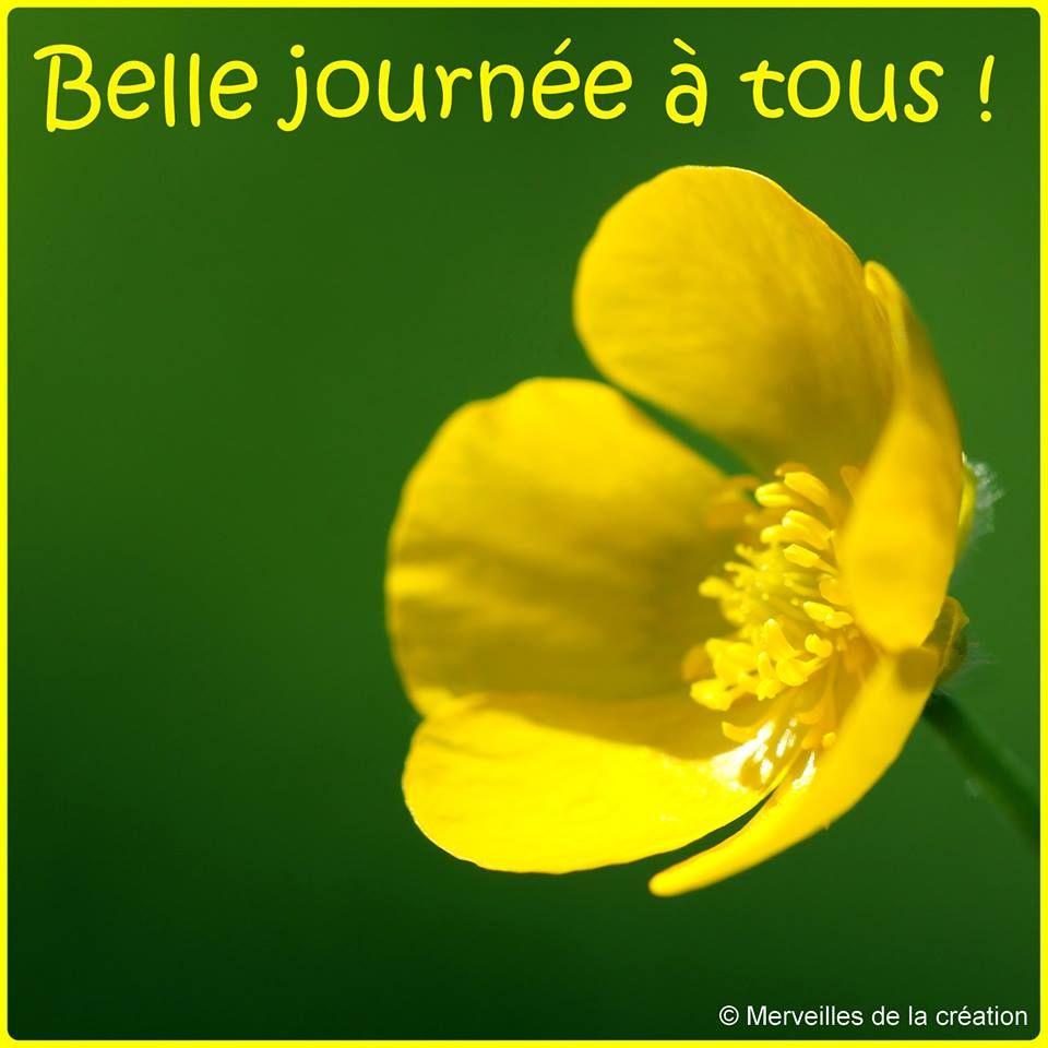 Belle journée à tous ! | Images bonjour, Bonne journée, Belle journee