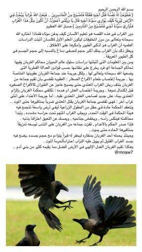 معلومات عن الغراب Animals Bird