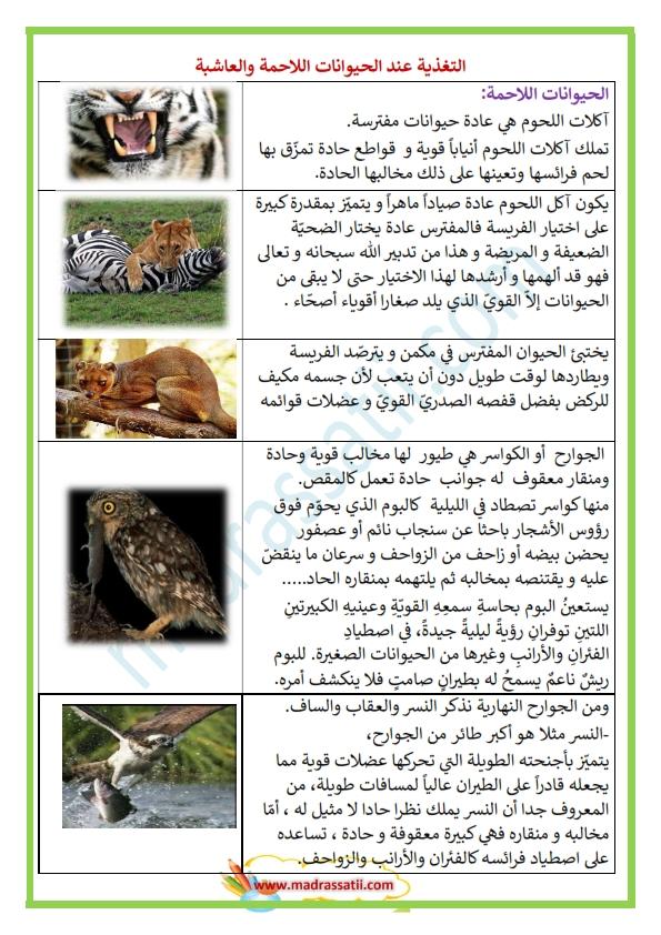 التغذية عند الحيوانات اللاحمة والعاشبة موقع مدرستي