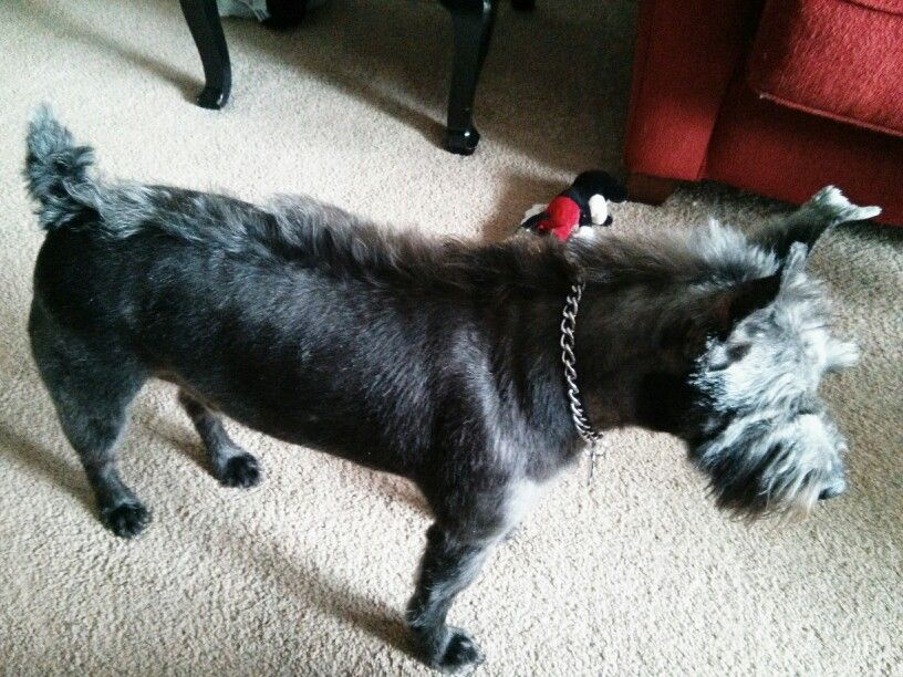 Donkey!!!..I want a dog like this so I can do this to his hair.
