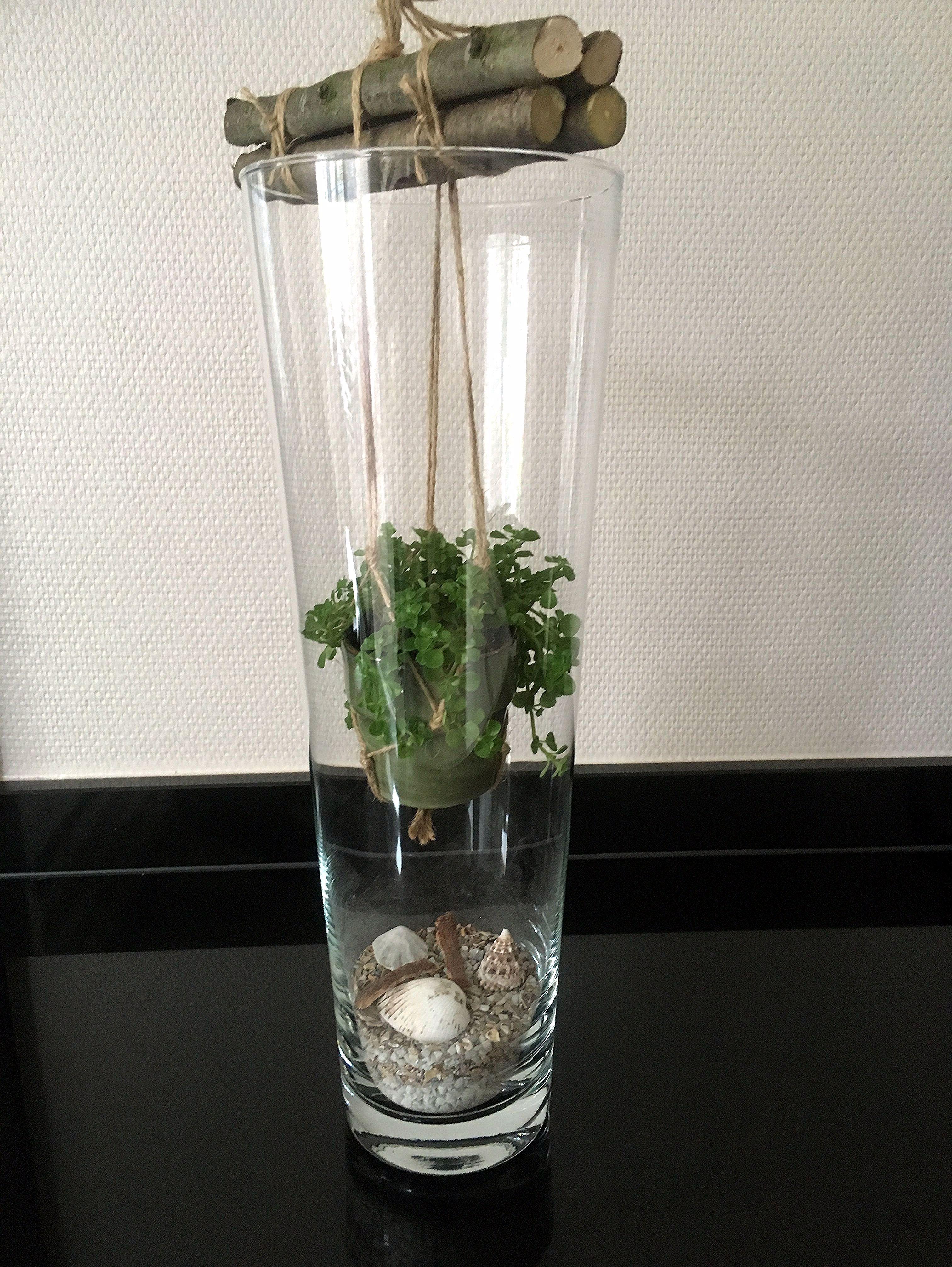 Idee Deco Pour Grand Vase Transparent jacinthe en 2020 | idée déco vase transparent, décorer vase