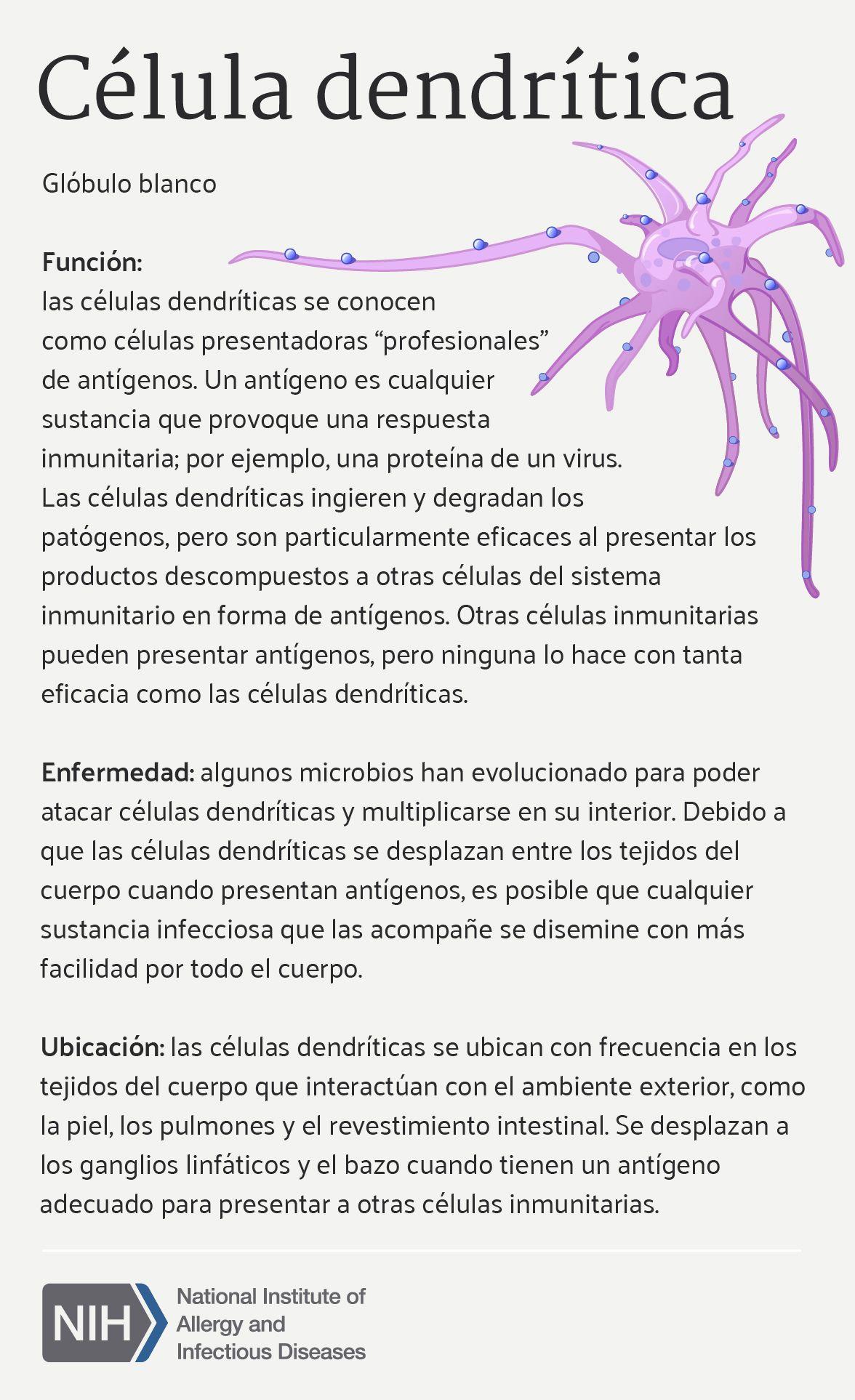Célula Dendrítica (Dendritic Cell) | Infographics