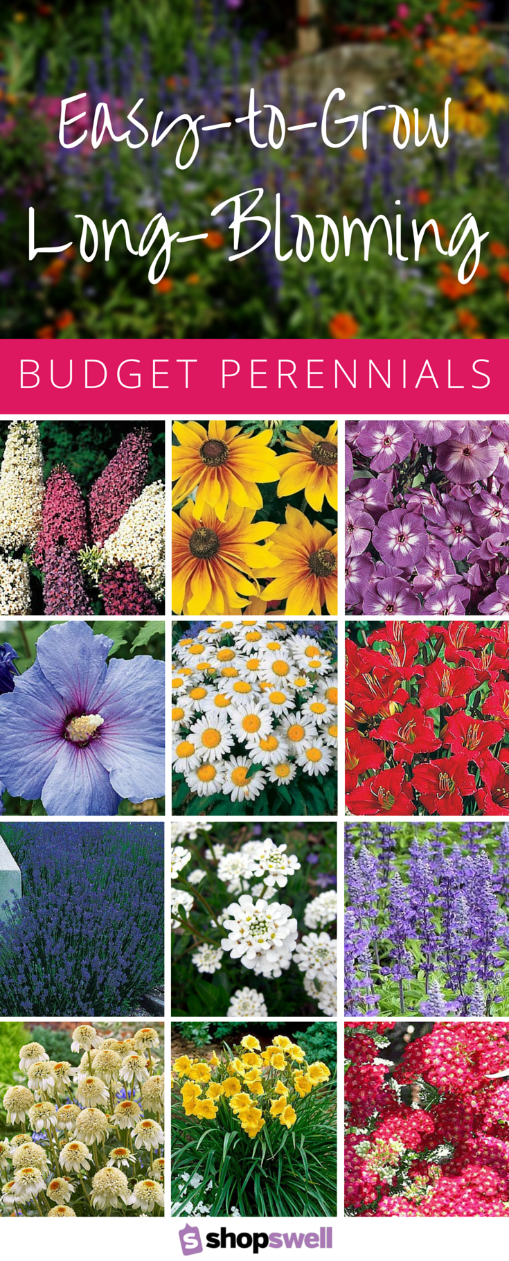 16 Budget Blooms You Can Depend On is part of Garden vines, Plants, Garden shrubs, Perennial garden, Flowers perennials, Perennials - These 16 garden perennials feature a long blooming season, easytogrow properties, and a budgetfriendly price  What's not to love ! Shop perennials from this collection now