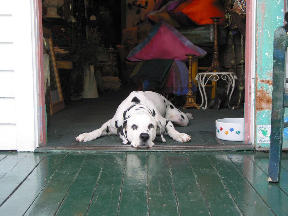 Jgm Pet Doors Offers Phoenix Arizona With Quality Pet Doors