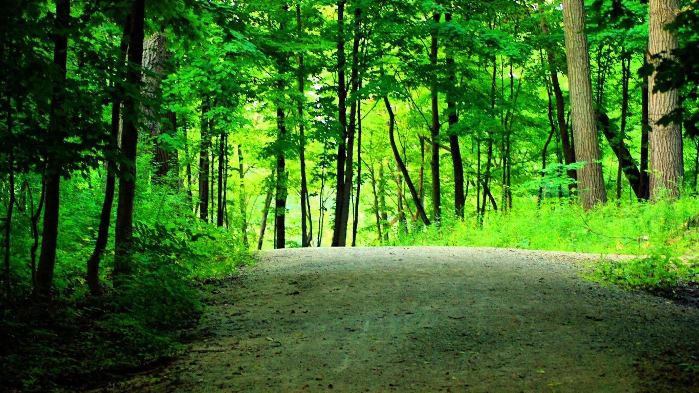 Woods Nature Forest Leaves Path Wedding Trees Trunks ...