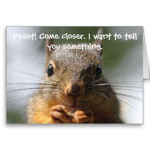 Funny Squirrel Birthday Card Funny Squirrel And Squirrel