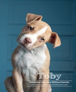 Adopt Toby On Pets Puppies Dogs