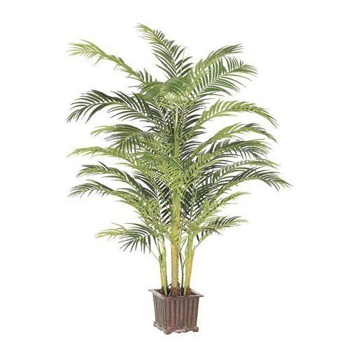 Areca Palm tree for the home.