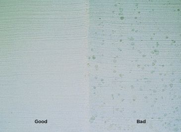 Mildew | Mold resistant paint, Mold and mildew, Painting ...