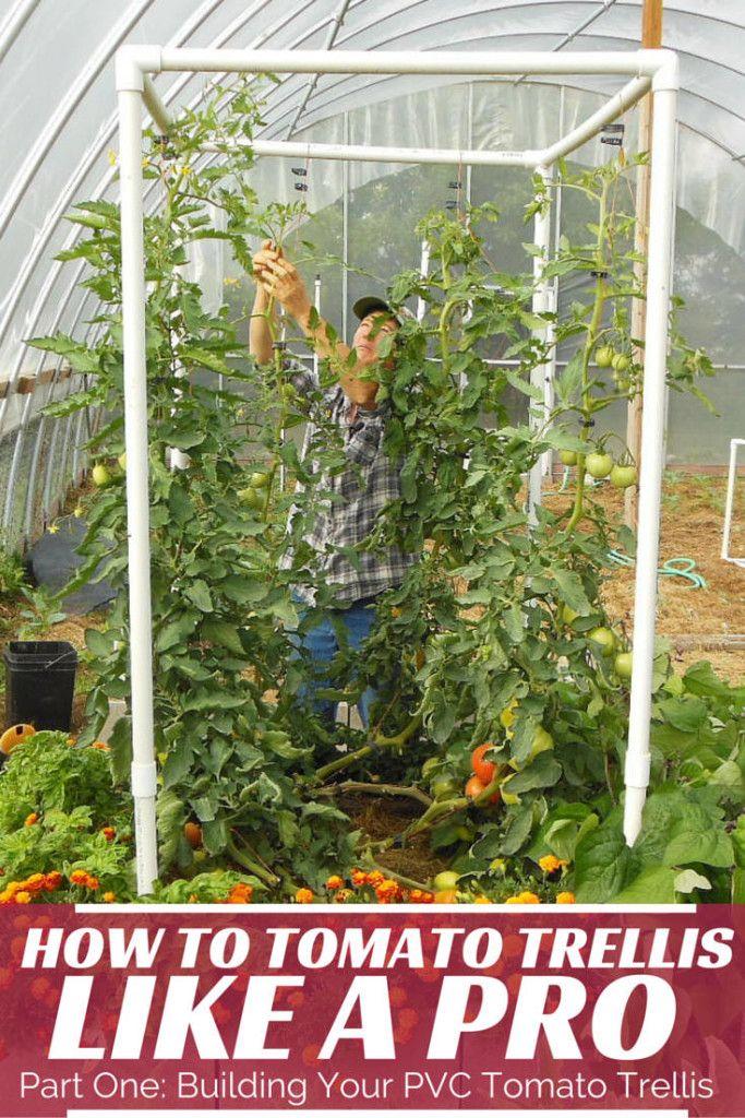 Easy PVC Tomato Trellis Part 1: Building Your Trellis | Urban ...