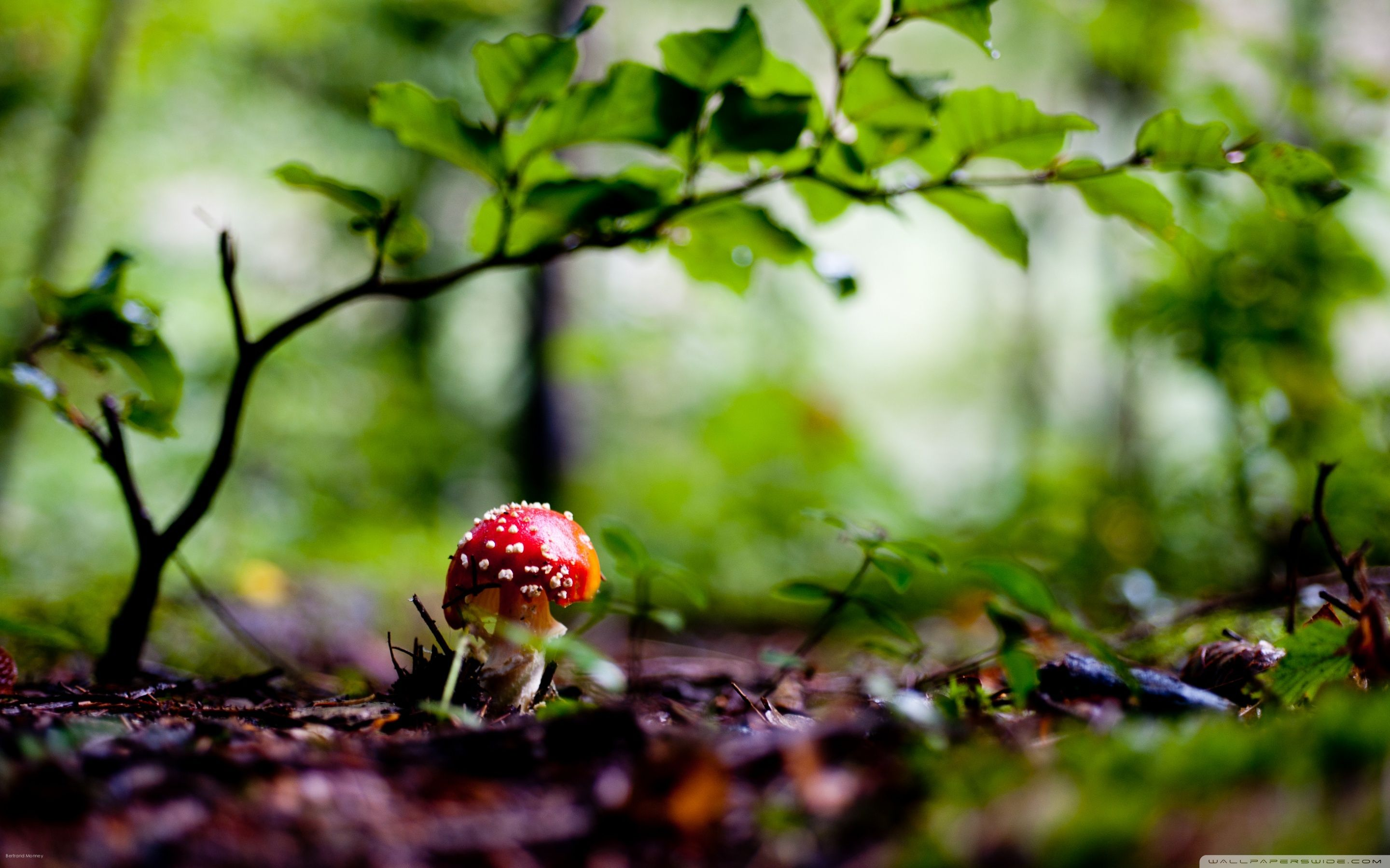 D Mushroom Wallpapers on