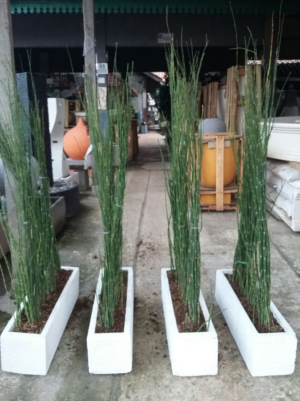 Pot Minimalis Panjang 75x20x20 Lengkap Dengan Tanaman Bambu