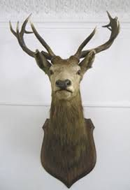 stags head taxidermy - Google Search