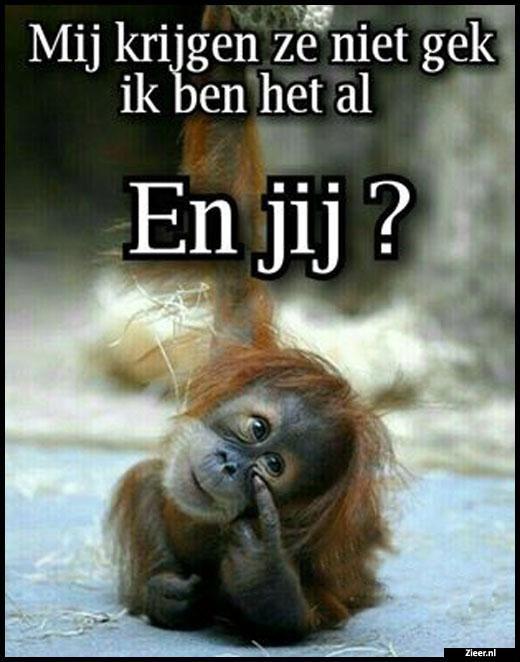 lollige spreuken Zieer.nl   grappige plaatjes, grappige foto's, grappige videos  lollige spreuken